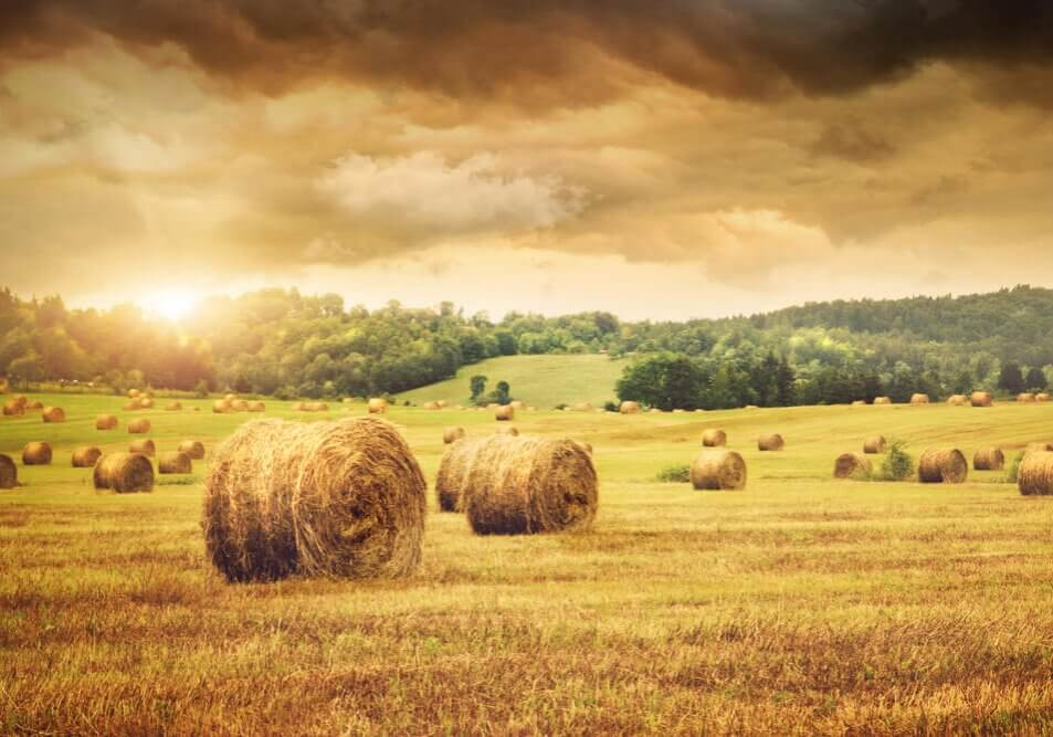 Field of freshly cut bales of hay with beautiful sunset